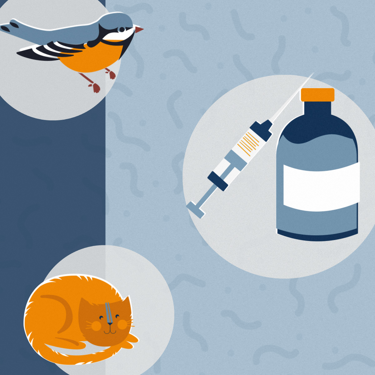 Standard Pet Vaccinations: What Does Your Animal Accomplice Need & Why? Square