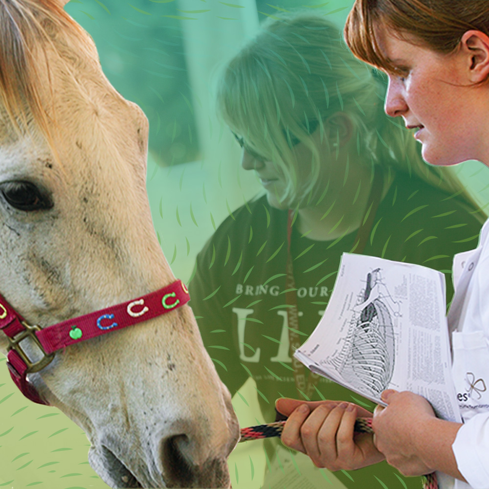 What Does a Large Animal Vet Do? Examining This Livestock-Focused Role Square