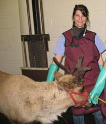 rivkah bradsky with reindeer
