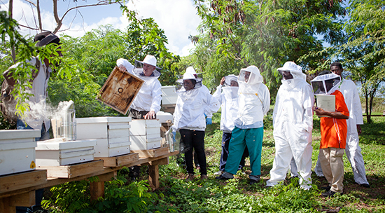 third annual caribbean bee college