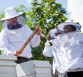 news caribbean bee college